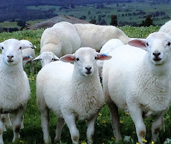 for the love of lamb™ About Us